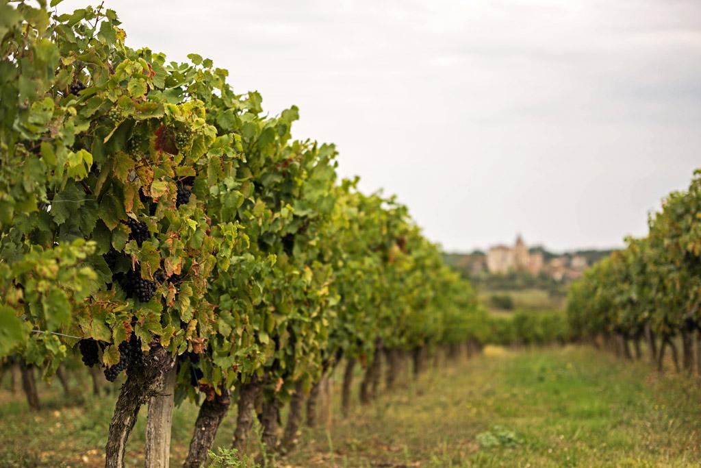 Vin et vignes